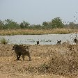 Pendjari National Park Tanguieta Benin Holiday Adventure