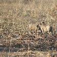 Pendjari National Park Tanguieta Benin Diary
