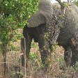 Pendjari National Park Tanguieta Benin Trip Photographs