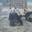 Things to do in Beijing China Diary Experience Day Trip to the Zoo in Beijing