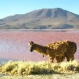 Uyuni salt flats tour Bolivia Holiday Review