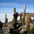 Uyuni salt flats tour Bolivia Diary Pictures