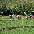 Madagascar Travel Ambositra Trip Photographs