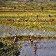 Madagascar Travel Ambositra Experience