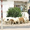 Asmara Eritrea Pictures Travel Blog