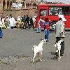Asmara Eritrea Vacation Information
