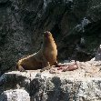 Reserva Nacional de Paracas near Pisco Peru Diary Information
