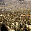 From Arequipe to Chivay and Colca Canyon Peru Travel Blog
