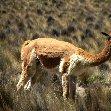 Chivay Peru Trip Experience