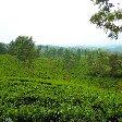 Bogor Botanical Garden Indonesia Travel Blog