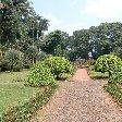 Bogor Botanical Garden Indonesia Photograph
