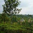 Bogor Botanical Garden Indonesia Blog