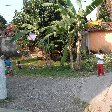 Bogor Botanical Garden Indonesia Vacation Experience