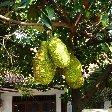 Bogor Botanical Garden Indonesia Review Photo