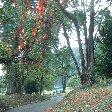 Bogor Botanical Garden Indonesia Information