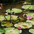 Bogor Botanical Garden Indonesia Travel Diary