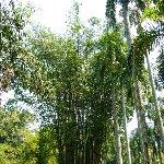 Bogor Botanical Garden Indonesia Trip Sharing