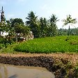 Bogor Botanical Garden Indonesia Blog Adventure