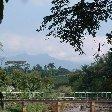 Bogor Botanical Garden Indonesia Diary Photos