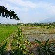 Bogor Botanical Garden Indonesia Picture gallery
