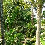 Bogor Botanical Garden Indonesia Album Pictures
