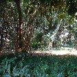 Bogor Botanical Garden Indonesia Review Photograph