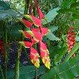 Bogor Botanical Garden Indonesia Blog Information