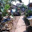 Bogor Botanical Garden Indonesia Diary Experience