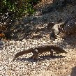 Komodo dragon habitat on Rinca island Indonesia Trip Photographs
