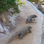 Komodo dragon habitat on Rinca island Indonesia Trip Photo