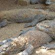 Komodo dragon habitat on Rinca island Indonesia Photo