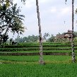 Best hotel in Ubud Bali Indonesia Diary Photography