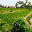 Best hotel in Ubud Bali Indonesia Trip Photo