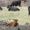 Ten Sleep Wyoming United States Blog Pictures