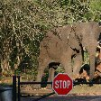Kruger National Park Nelspruit South Africa Diary Tips Kruger National Park