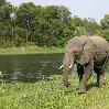 Gweru Antelope Park Zimbabwe Vacation Experience