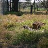 Gweru Antelope Park Zimbabwe Information Gweru Antelope Park