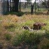 Gweru Antelope Park Zimbabwe Information Gweru Antelope Park