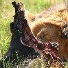 Gweru Antelope Park Zimbabwe Picture Sharing