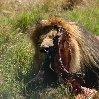 Gweru Antelope Park Zimbabwe Trip Sharing
