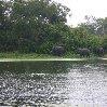 Gweru Antelope Park Zimbabwe Vacation