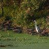 Gweru Antelope Park Zimbabwe Album
