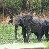 Gweru Antelope Park Zimbabwe Blog Information