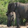 Chobe National Park Botswana Kasane Adventure