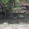 Chobe National Park Botswana Kasane Travel Blog
