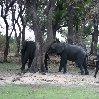 Chobe National Park Botswana Kasane Travel Blogs