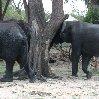 Chobe National Park Botswana Kasane Photos
