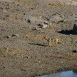 Okaukuejo Namibia Vacation Diary