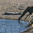 Etosha National Park Namibia Okaukuejo Trip Picture