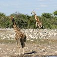 Etosha National Park Namibia Okaukuejo Picture Etosha National Park Namibia